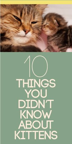 10 Things You Didn't Know About Kittens
