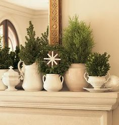 potted cypress plants