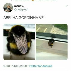 Funny Laugh, Wtf Funny, Funny Relatable Memes, Funny Posts, Cute Animals, Animals And Pets, Crush Memes, Memes Status, Naruto Cute