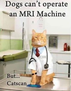 """Diagnostic Imaging Services asks """"Do felines have the better technological ability?"""""""