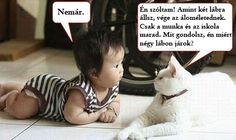 humoros állatos képek - Google keresés