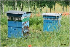Blue, Country Bee Hives