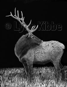 Let's Rumble (elk-companion piece to Bring It On), scratchboard, prints available