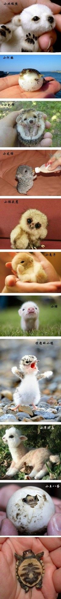 I defy you to still be in a blah mood after looking at these super tiny animals. Even the miniature blowfish is cute.