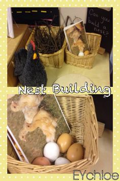Nest building provocation. Cards to create the chicken life cycle and eggs/ chicken to role play. EYchloe