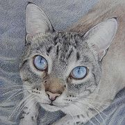 Thumbnail of a Tabby Cat with blue eyes