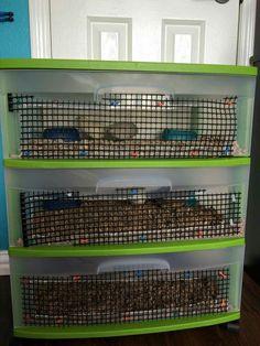 Button quail housing