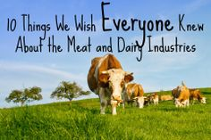 10 Things We Wish Everyone Knew About the Meat and Dairy Industries: http://www.peta.org/living/food/10-things-wish-everyone-knew-meat-dairy-industries/  #govegan #veganism #animalrights