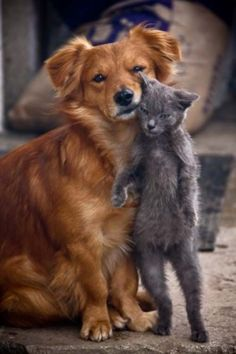 Fighting like cats and dogs is the common phrase used. - If cats and dogs can live in such affectionate terms why can't we humans?