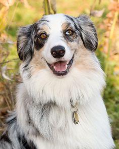 Australian Shepherd...I miss my ROXY! She was the best dog EVER!!