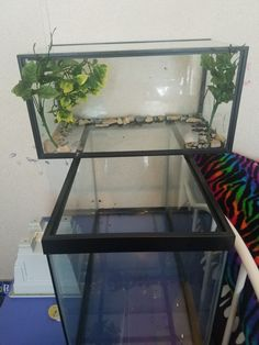 My red eared slider tank i used a 10 gallon as land and 20 gallon as the water its gonna be awesome Aquatic Turtle Habitat, Aquatic Turtle Tank, Turtle Aquarium, Aquatic Turtles, Turtle Pond, Turtle Terrarium, Reptile Terrarium, Turtle Care, Pet Turtle