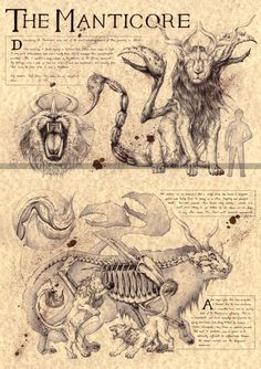 Rougarou Louisiana Werewolf folklore art sketch, cryptozoology field guide, bestiary art, myths and monsters Mythical Creatures Art, Mythological Creatures, Mythological Monsters, Myths & Monsters, Sea Monsters, Fantasy Beasts, Legends And Myths, Arte Obscura, Fantasy Monster