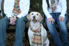 it's gonna be a burberrific christmas! my kids & our sweet lab #christmas #picture
