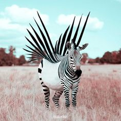 A Punk Zebra. Animals and Architecture Photoshopped Surrealism. By Julien Tabet.