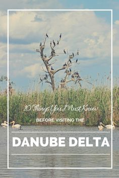 www.cityoftheweek.net/10-things-before-visiting-the-danube-delta