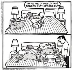 © Off The Leash Dog Cartoons / Rupert Fawcett Time For Bed