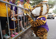 LSU Tigers Football, Baseball, Basketball | Sports & Athletics NOLA.com