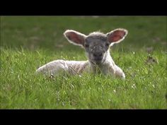 Psalm 23 Psalm 23, Religion, Youtube, Animals, Bible, Reading, Biblia, Animales, Animaux