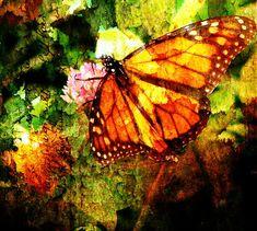 Monarch Grunge Digital Art