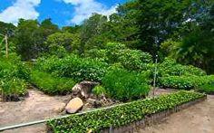 Mais de 50 mil mudas de pau-brasil são plantadas em reserva de Pernambuco