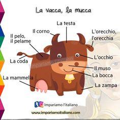 Learning Italian, Carne, Italy, Italian Vocabulary, Italian Language, Pictogram, Teaching Materials, Italia, Learn Italian Language