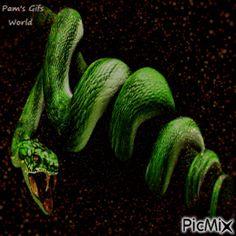6280837_390d1.gif (300×300) Snake Gif