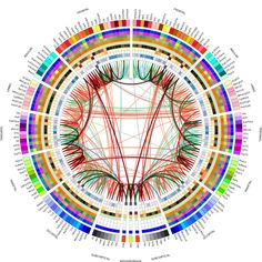 Connectogram - Wikipedia, the free encyclopedia Philosophy Of Mind, Meditation Benefits, Manga Drawing, Data Visualization, Science And Nature, App Design, Free, Infographics, Neuroscience