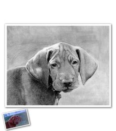 Artist unknown/Gift Idea: Hand Drawn Pencil Sketch of Your Dog Pencil Drawings Of Animals, Art Drawings, Beautiful Pencil Sketches, Hand Sketch, Pencil Art, Pencil Sketching, Chalk Art, Pet Portraits, Hand Drawn