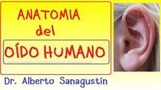 Anatomía del OÍDO HUMANO explicado FÁCIL Movies, Movie Posters, Audio, Human Ear, Films, Film Poster, Cinema, Movie, Film