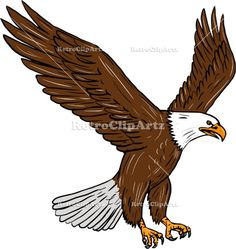 Bald Eagle Flying Drawing Vector Stock Illustration.  Drawing sketch style illustration of bald eagle flying wings flapping viewed from the side set on isolated white background.  #illustration #BaldEagleFlying