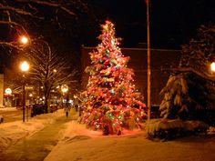 Glens Falls North, NY : City of Glens Falls Christmas Tree Fall Christmas Tree, Glens Falls, Take Care Of Me, Holiday Decor, City, Winter, Memories, York, Remember This