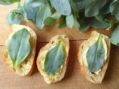Les huitres sont très prisées sur le plan gastronomique depuis déjà plusieurs siècles. Pourtant, nombreux sont les gastronomes qui n'apprécient pas la texture de ce mollusque marin. Sachez qu'il existe une alternative végétale ! La Mertensia maritima, plus couramment appelée «Huitre potagère» est une plante comestible au goût iodé qui possède des feuilles légèrement croquantes …