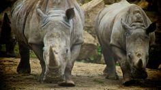 Rhinos at Dublin zoo by Paul Madden