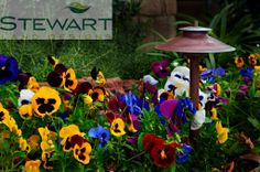 At Stewart Land Designs we specialize in the design and installation of custom pools, irrigation, lighting, pavers, retaining walls and water features. Custom Pools, Flower Making, Water Features, New Orleans, Backyard, Inspired, Create, Garden, Wall