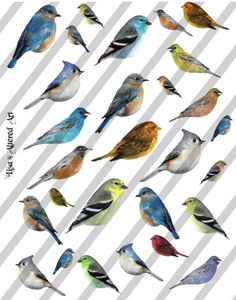 Digital Collage Sheet Birds Sheet no. FS2 by lisasalteredart