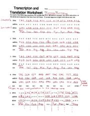 Transcription and Translation Worksheet Answers ...