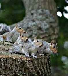 Squirrel spectators