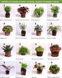 Pflanzen, die sich für Pflanzwände und Vertikale Gärten eignen