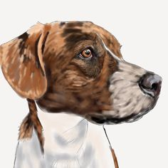 My last post was in OCTOBER () because #Christmascommissions. But now that Christmas is over I can share all of the gorgeous pets I had the privilege of working on but hadnt been able to share yet.  First up: Instagram meet Maxthe most ridiculously beautiful brindle dog youve ever laid your eyes upon. I had a great reference photo to work from with sharp clear lighting and you can really tell how much it helps when it comes to the detail work needed for #thecliffordpackage. Ill post some…