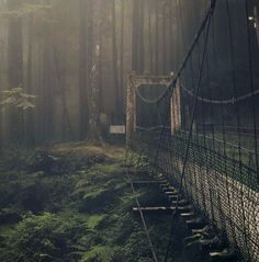 Forest Bridge aka Suicide Forest Japan. If it weren't for all the dead bodies, this would be a lovely visit