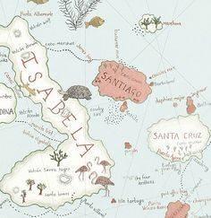 Обои для детской комнаты 213364 Sanderson 213364 Galapagos Ocean Blue