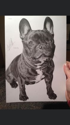 Drawing Commissions, Art Things, Amazing Art, French Bulldog, Period, Cute Animals, My Etsy Shop, Arts And Crafts, Drawings