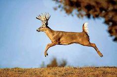 When Bucks fly!!