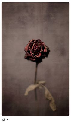 If anyone ever gives me a dead rose, I'll know they understand me.