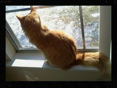 he looks out the window wistfully awaiting it to get warm so he can go play outside. Pancake Cat, Looking Out The Window, How To Get Warm, Play, Canning, Cats, Animals, Gatos, Animales