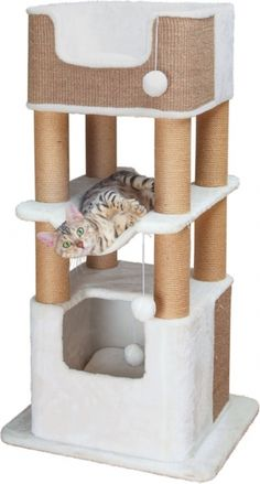 Cat Training With a Clicker Cat Gym, Cat Tree House, Diy Cat Tree, Cat Stands, Cat Playground, Cat Condo, Pet Furniture, Cat Accessories, Cat Wall