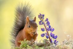 Photo squirrel and flower by Geert Weggen on 500px