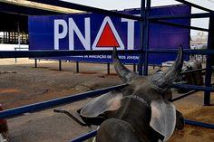 Inscrições abertas para Rebanho Colaborador do PNAT