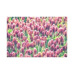 Purple Red Clover Wild Flowers Wrapped Canvas - purple floral style gifts flower flowers diy customize unique
