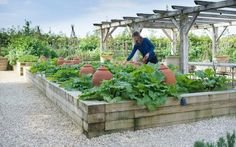 Soho Farmhouse: a guided tour of the kitchen garden Soho Farmhouse, Farmhouse Garden, Edible Plants, Edible Garden, Beautiful Landscapes, Beautiful Gardens, Gardening Courses, Learn A New Skill, Growing Herbs